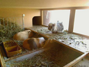 schnarchschweine.png